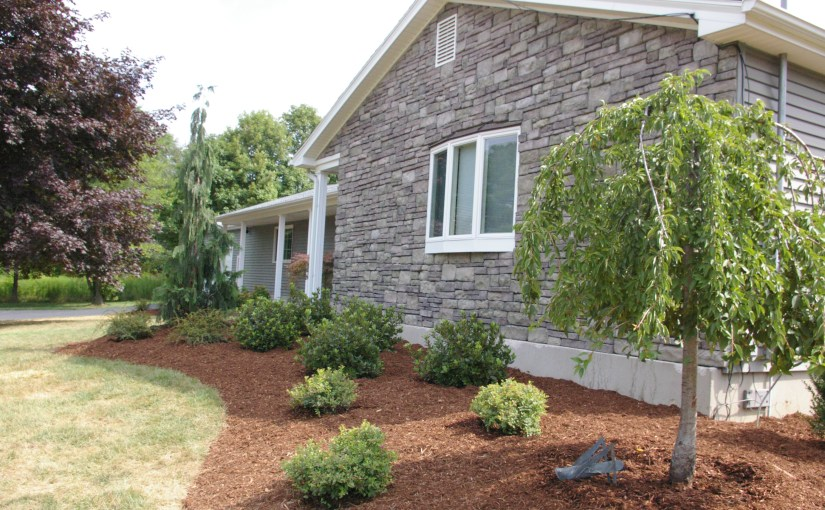 How to Care for Your New Landscape