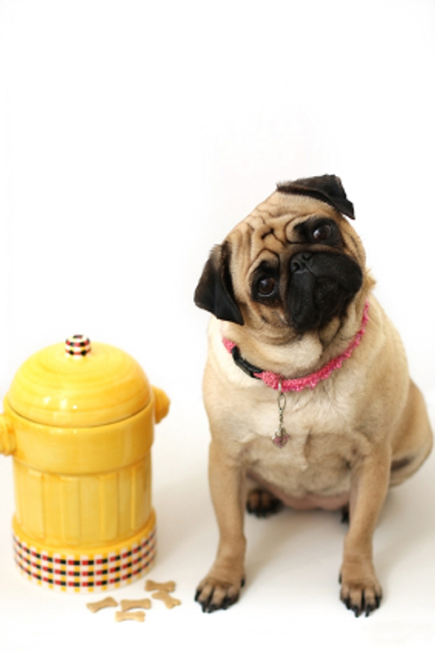 Storing dog treats and biscuits advice from doggy dessert chef