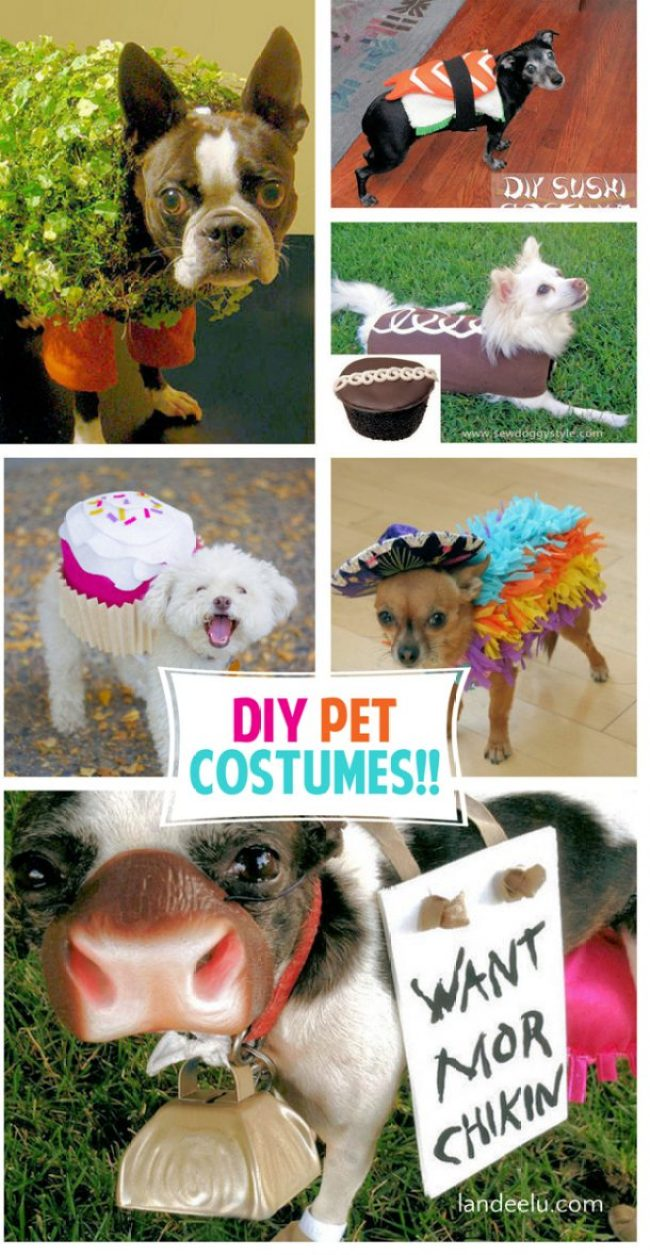 DIY Pet Costumes for Halloween! | landeelu.com I can't stand the cuteness!