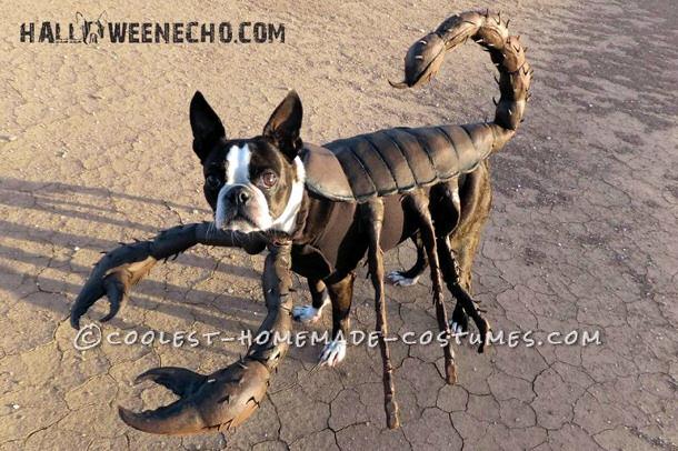 echo-the-scorpion-12196-800x533