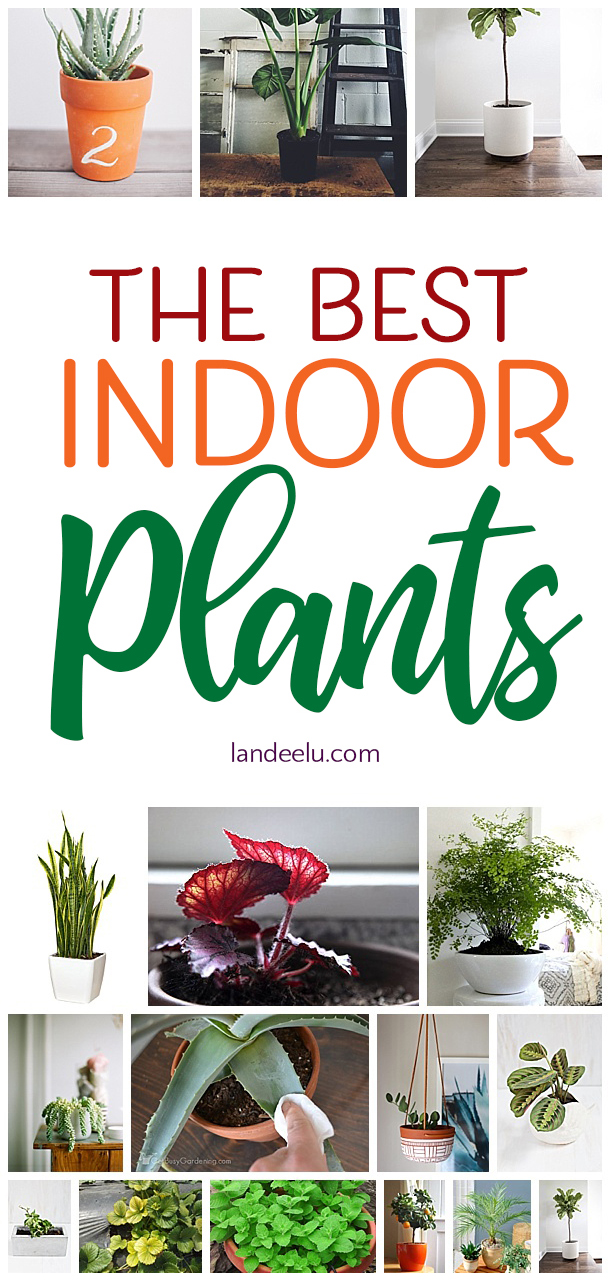 I love these suggestions for the best indoor plants for my home. Great list! #indoorplants #plantlady #greenthumb #plants