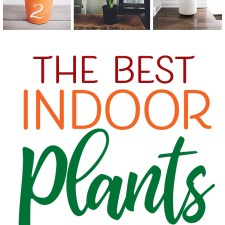 Best Indoor Plants to Bring LIFE to Your Home!