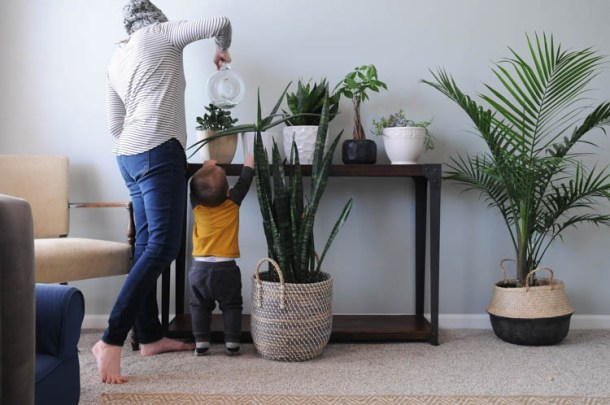 Houseplant Tips and Ideas for Beginners | My Breezy Room