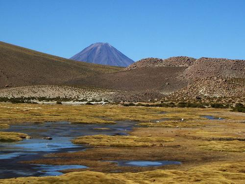 CHILI Planten en Dieren  Landenwebnl