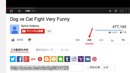 Dog vs Cat Fight Very Funny   YouTubeのコピー
