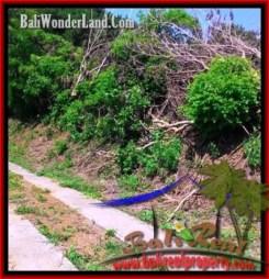 Beautiful LAND FOR SALE IN TABANAN TJTB199