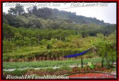 Exotic PROPERTY 52,000 m2 LAND IN Pancasari FOR SALE TJTB164