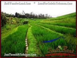 Affordable 9,500 m2 LAND IN TABANAN BALI FOR SALE TJTB210