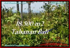 FOR SALE 18,500 m2 LAND IN TABANAN TJTB232
