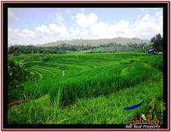 Exotic PROPERTY LAND SALE IN TABANAN TJTB227