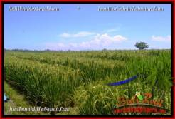 Affordable PROPERTY 1,000 m2 LAND FOR SALE IN Tabanan Selemadeg TJTB266