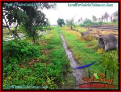 Beautiful LAND FOR SALE IN TABANAN TJTB261