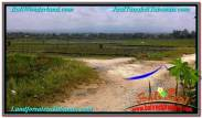 Magnificent PROPERTY 450 m2 LAND IN Tabanan Kerambitan FOR SALE TJTB292