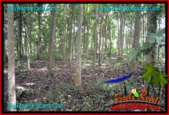 Affordable PROPERTY 11,100 m2 LAND IN Tabanan Penebel BALI FOR SALE TJTB320