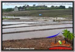 Affordable PROPERTY LAND FOR SALE IN TABANAN BALI TJTB308