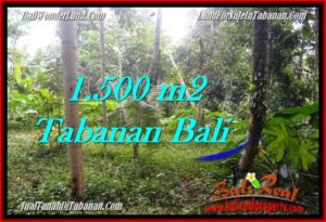 FOR SALE Affordable LAND IN Tabanan Penebel BALI TJTB279