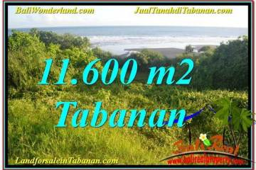 Affordable 11,600 m2 LAND FOR SALE IN Tabanan Selemadeg TJTB340