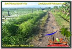 Beautiful 17,604 m2 LAND FOR SALE IN TABANAN TJTB342