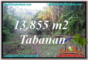 Beautiful Tabanan Selemadeg 13,855 m2 LAND FOR SALE TJTB335