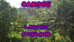 Land for sale in Bali, fabulous view in Canggu Berawa – TJCG111