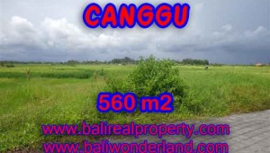 Beautiful Property for sale in Bali, LAND FOR SALE IN CANGGU Bali – TJCG138