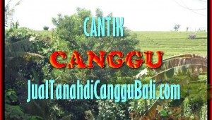 Exotic 1.700 m2 LAND SALE IN Canggu Pererenan BALI TJCG143