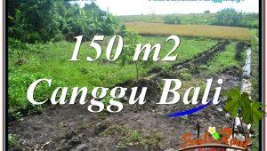 Exotic PROPERTY 150 m2 LAND SALE IN CANGGU TJCG213