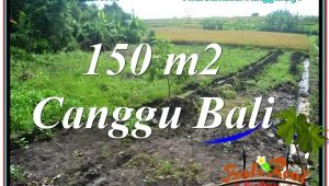 Exotic PROPERTY 150 m2 LAND SALE IN CANGGU TJCG213