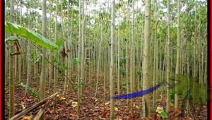 FOR SALE Exotic PROPERTY 3,000 m2 LAND IN TABANAN BALI TJTB159