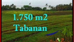 1,750 m2 LAND SALE IN TABANAN TJTB262
