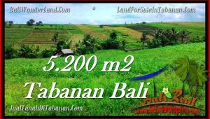 Affordable 5,200 m2 LAND FOR SALE IN TABANAN BALI TJTB281