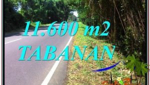 Magnificent LAND FOR SALE IN Tabanan Selemadeg TJTB327