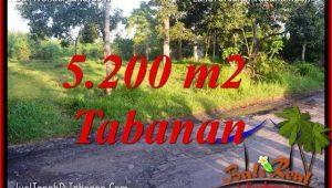 5,200 m2 LAND SALE IN Tabanan Selemadeg BALI TJTB334
