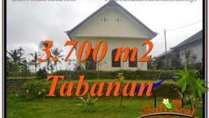 Beautiful 3,700 m2 LAND SALE IN TABANAN BALI TJTB336