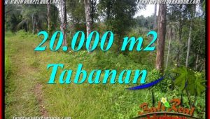 Magnificent Tabanan Selemadeg Timur 20,000 m2 LAND FOR SALE TJTB365