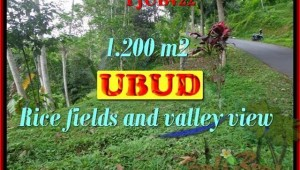 Affordable LAND FOR SALE IN Ubud Tegalalang BALI TJUB422