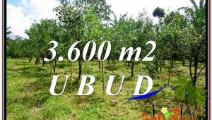 Beautiful PROPERTY LAND FOR SALE IN UBUD BALI TJUB599