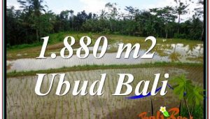 Exotic PROPERTY UBUD LAND FOR SALE TJUB613