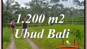 FOR SALE Exotic 1,200 m2 LAND IN UBUD TJUB624