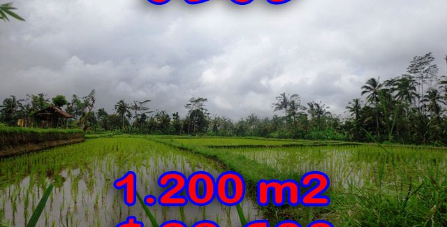 Land for sale in Ubud 12 Ares in with Natural view