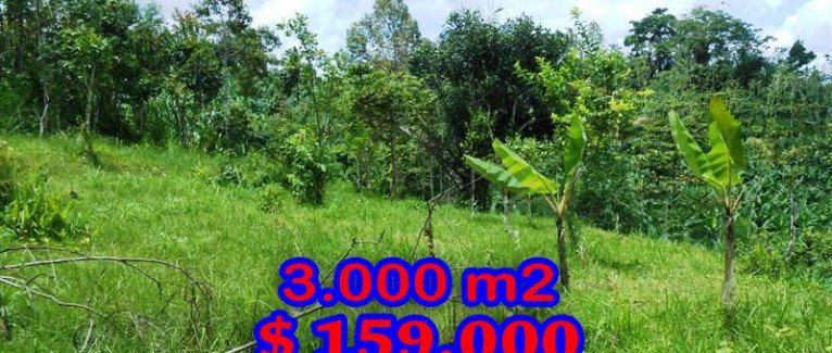 Ubud Land for sale Mountain view in Ubud Payangan Bali