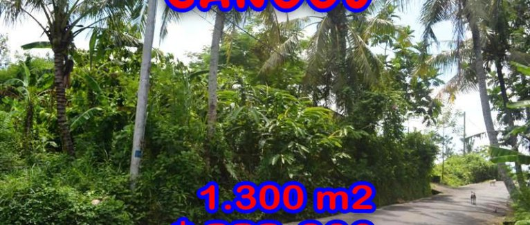 Fantastic Property for sale in Bali, land for sale in Canggu Bali  – 1.300 sqm @ $ 256