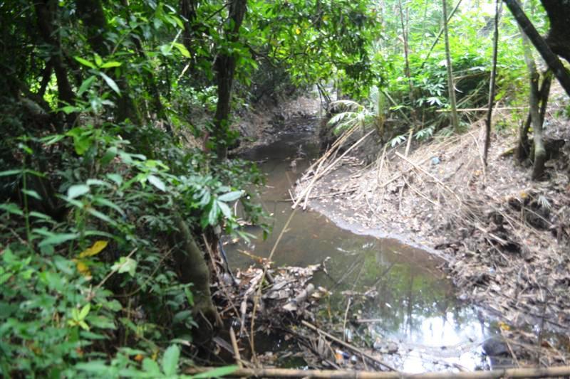 Land for sale in Canggu Bali