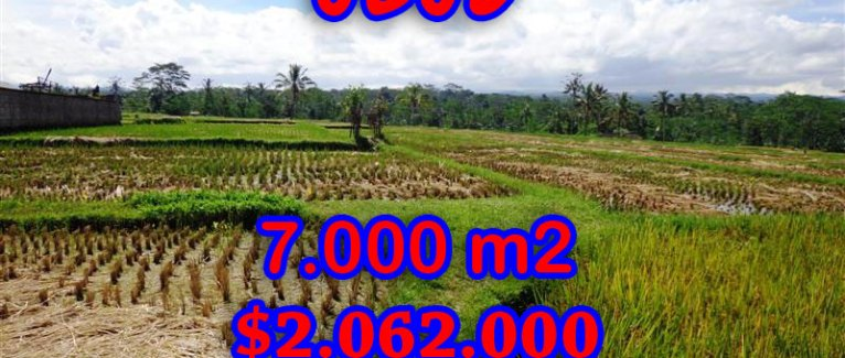 Property in Bali for sale, Spectacular land for sale in Ubud Bali  – 7.000 sqm @ $ 294
