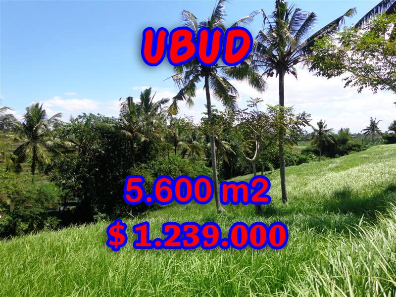 Land in Bali for sale, Magnificent rice paddy view by the river in  Ubud Center – TJUB299