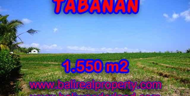 Astounding Property in Bali for sale, Rice fields and mountain view land in Tabanan Bali – TJTB134