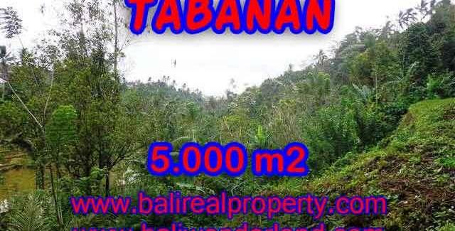 Spectacular Property in Bali, land for sale in Tabanan selemadeg – TJTB139
