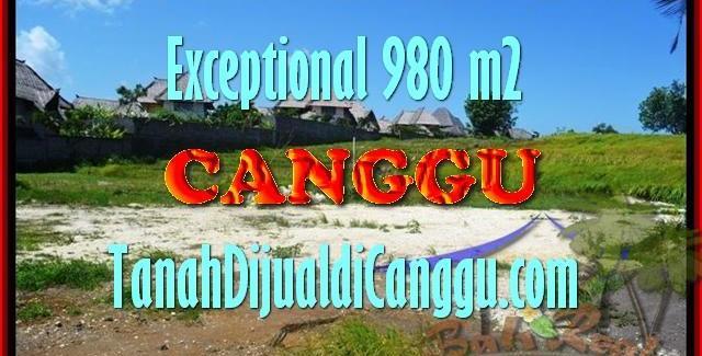 Affordable 980 m2 LAND SALE IN Canggu Pererenan BALI TJCG152