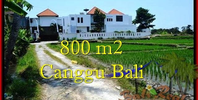 Affordable LAND IN Canggu Brawa FOR SALE TJCG194