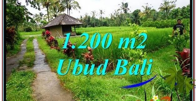 Beautiful LAND FOR SALE IN UBUD TJUB559